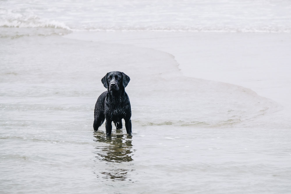 Labrador Summer in der Nordsee