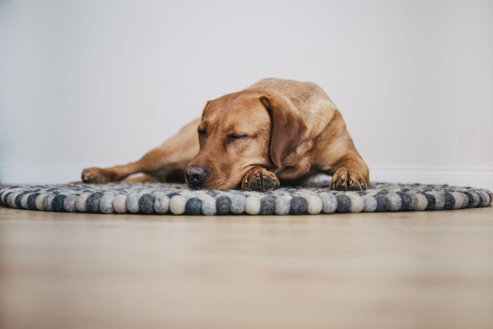Schlafende Finja - scheint gemütlich zu sein
