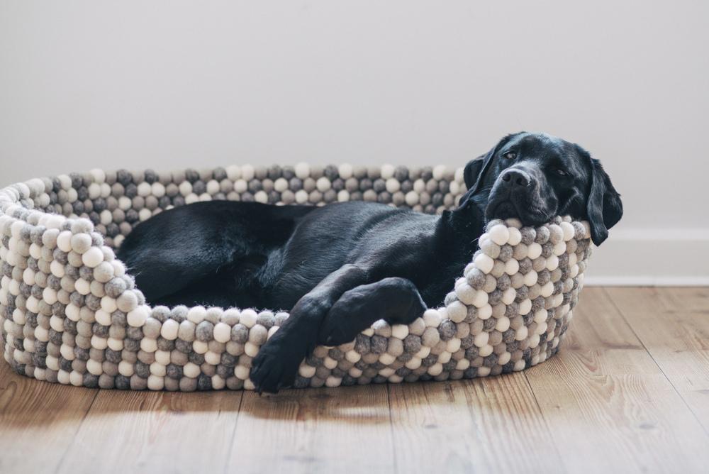 stylische hundek rbe aus filzkugeln pfotentick hundeblog. Black Bedroom Furniture Sets. Home Design Ideas