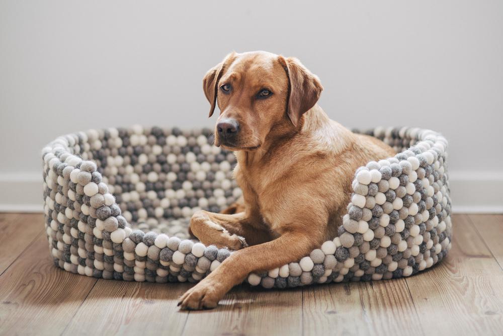 Ein kleiner Hund könnte sich noch zu Finja kuscheln