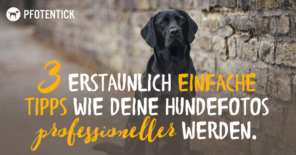 3 erstaunlich einfache tipps wie deine hundefotos professioneller werden pfotentick hundeblog. Black Bedroom Furniture Sets. Home Design Ideas