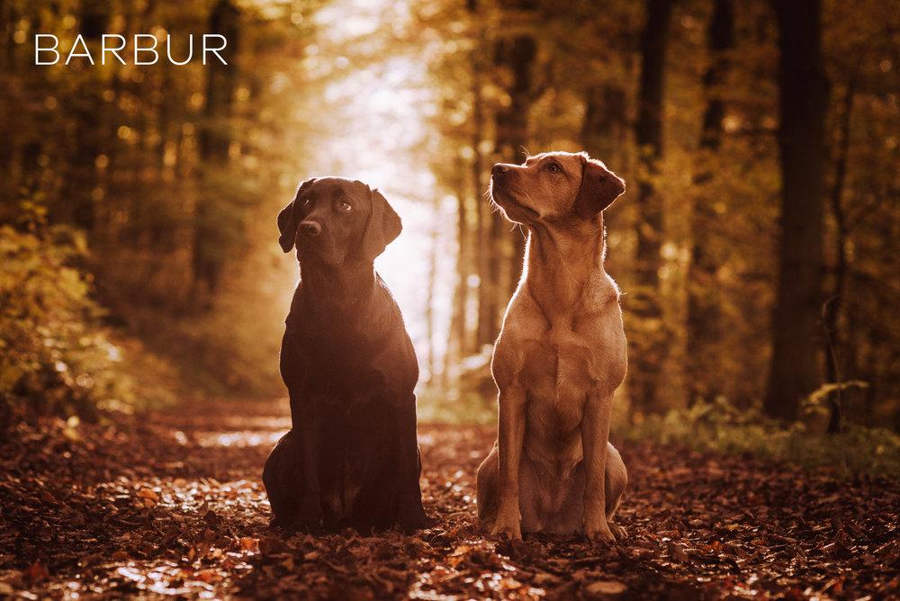 hunde-lightroom-presets4.jpg