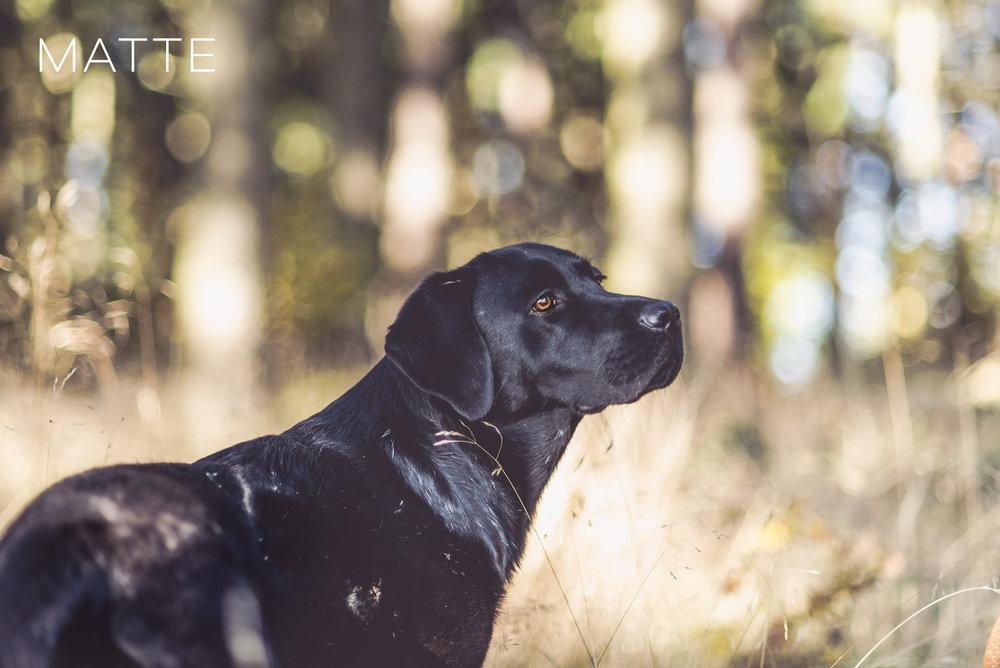 hunde-lightroom-presets2.jpg