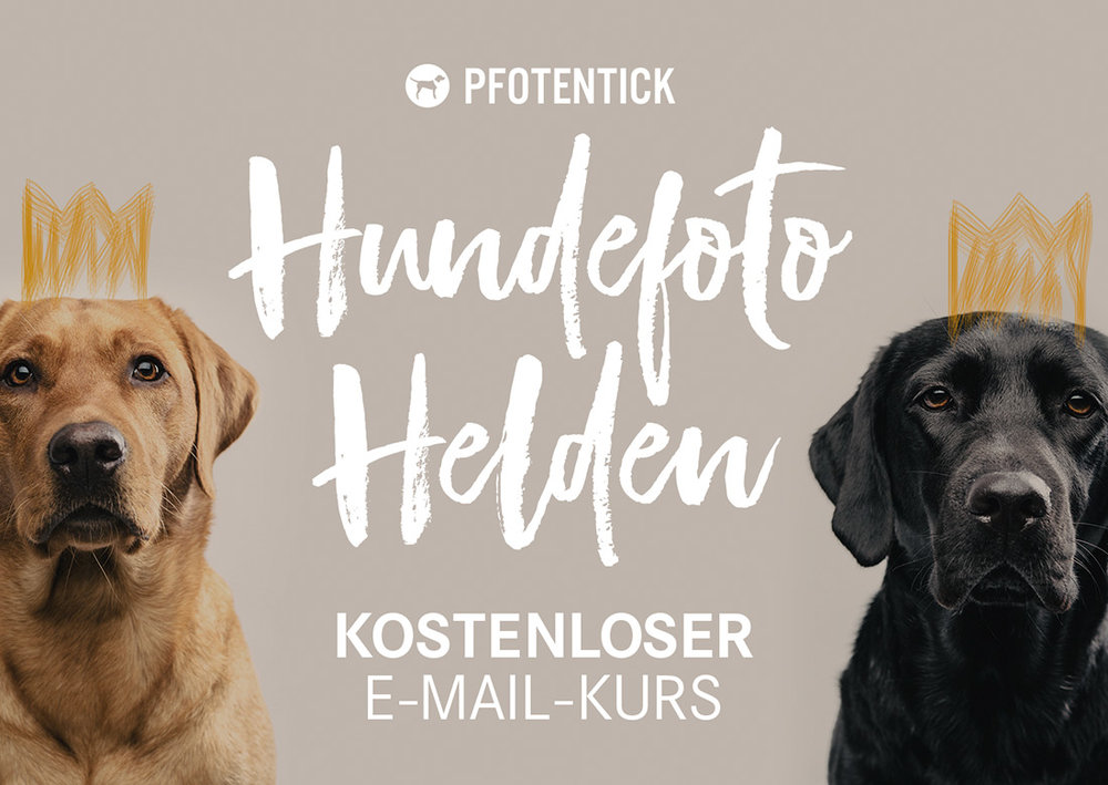 hundefoto-helden-scrollbox.jpg