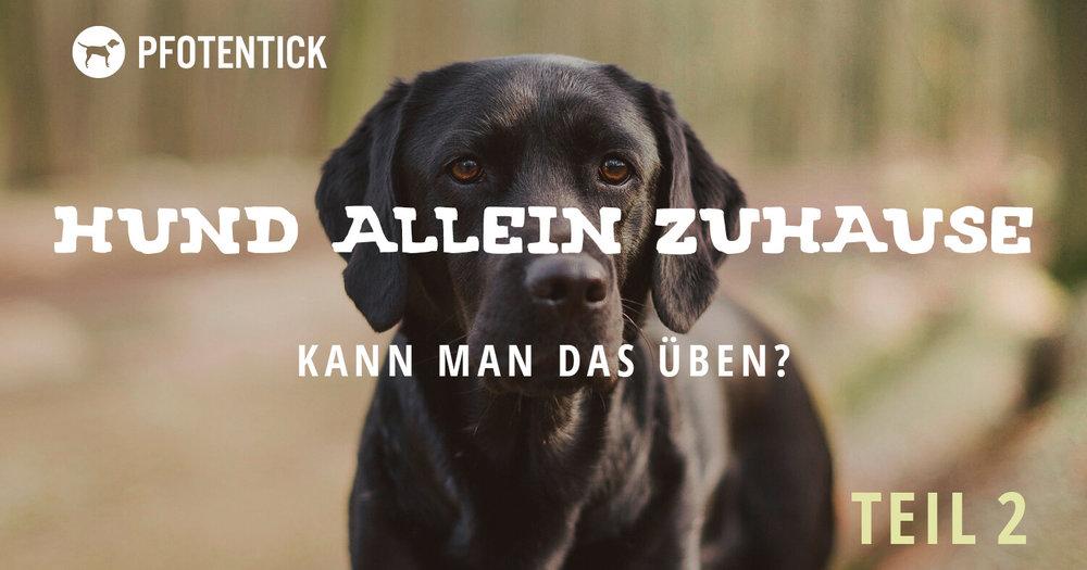 hund-alleinbleiben-ueben2(2).jpg