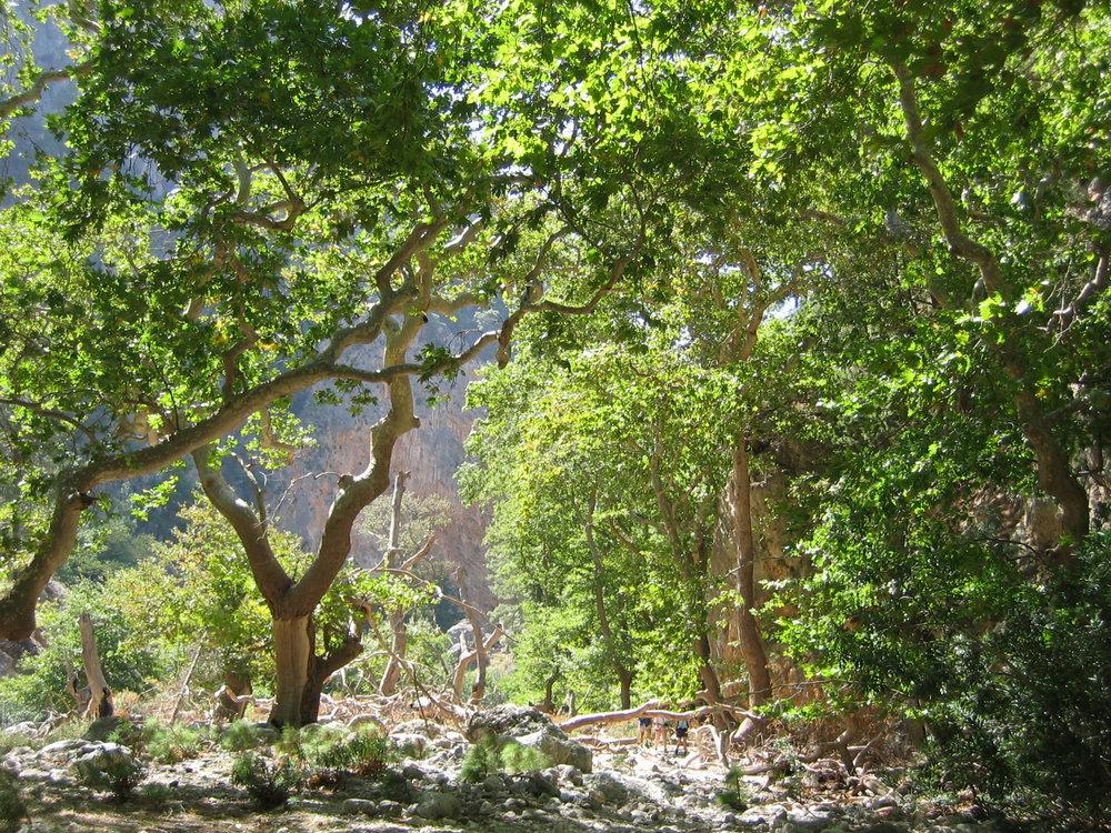 Agia Eirini gorge.jpg