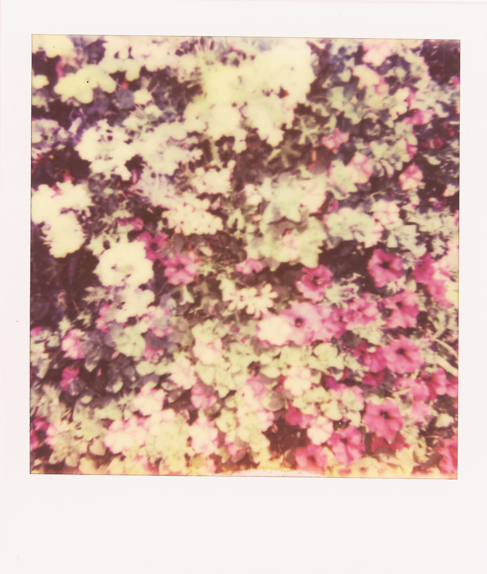 Impossible Project Film