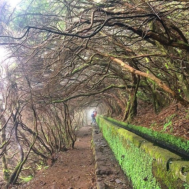 Straight into the Wild! #madeira #island #levada #walk #25fontes