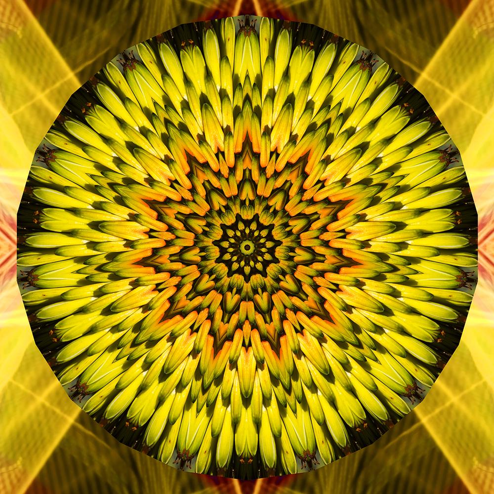 SOLAR_PLEXUS_CHK03.jpg