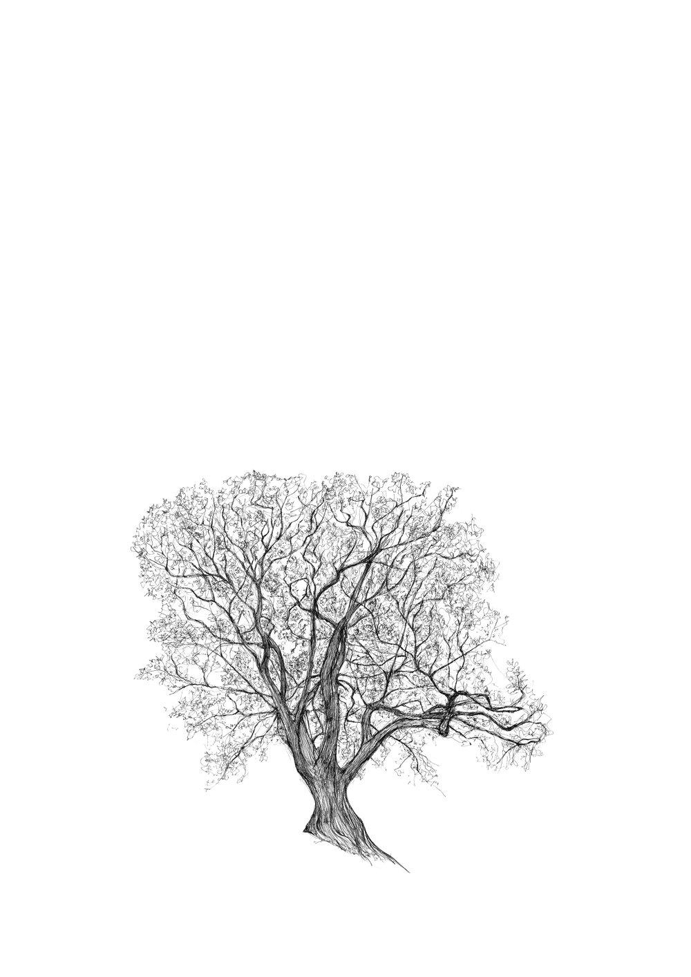 Battersea Park Strawberry Tree