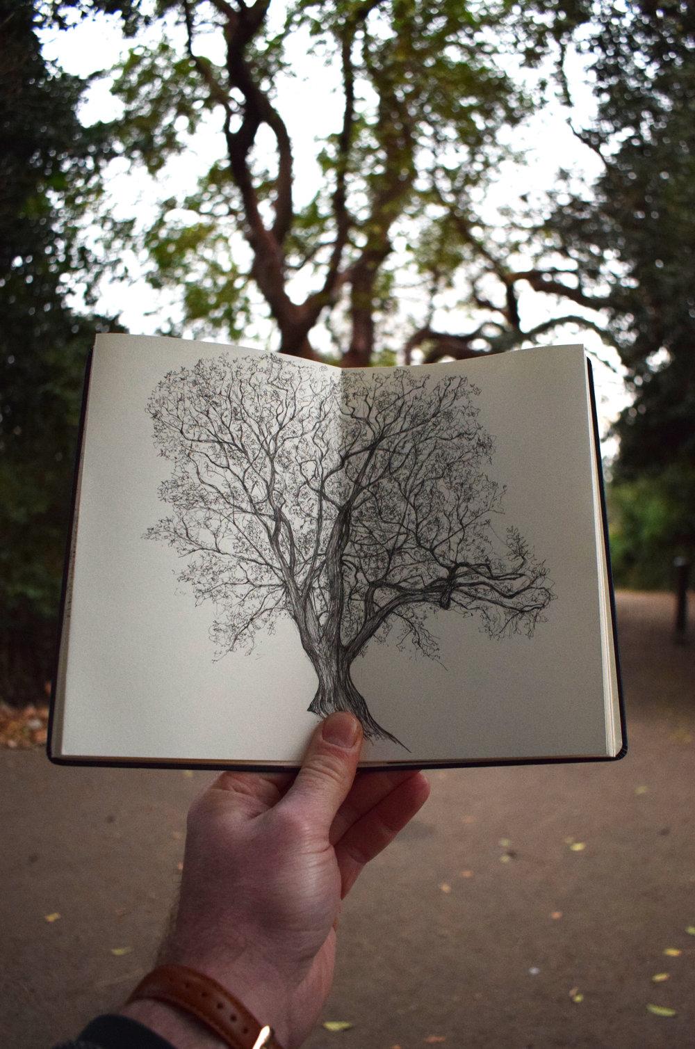 Battersea Strawberry Tree Luke Adam Hawker on location copy.jpg