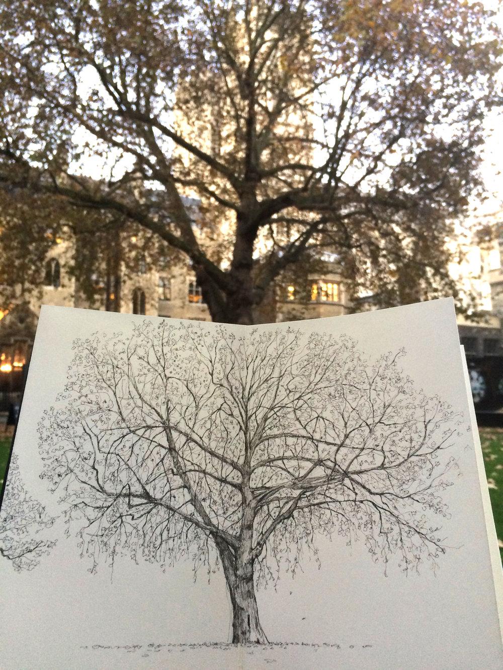 Deans Yard Tree Luke Adam Hawker on location.jpg