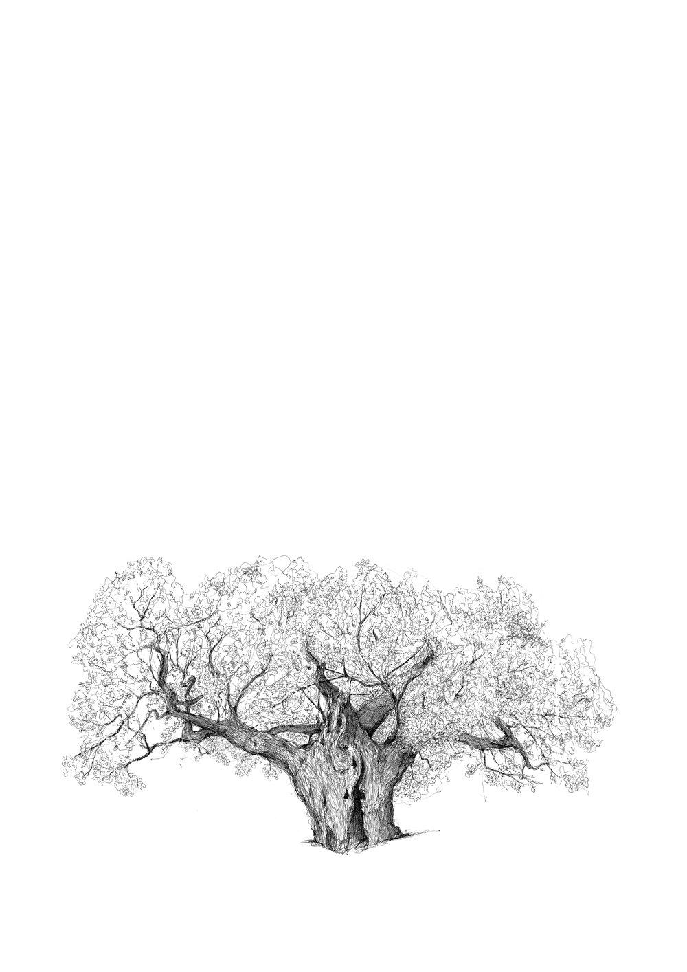 Richmond Royal Oak