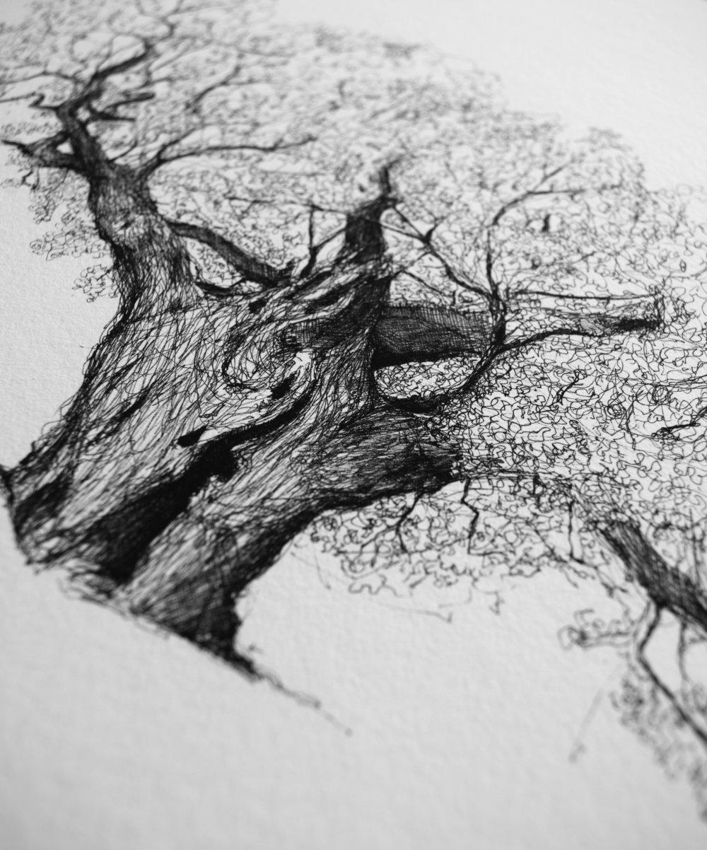 Richmond Royal Oak-Luke Adam Hawker-detail.jpg
