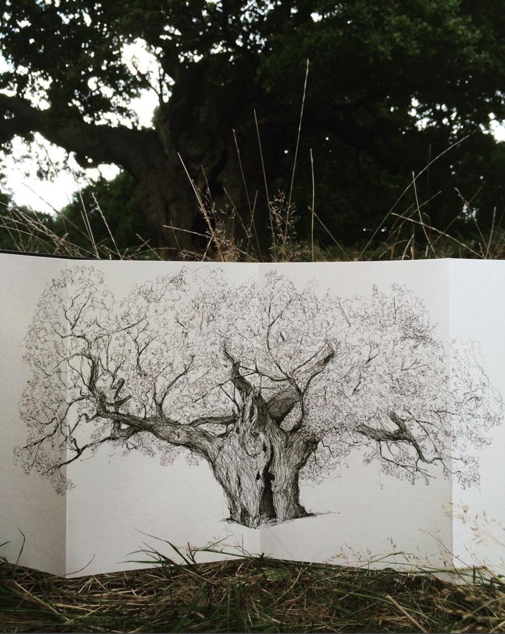 Richmond Royal Oak-Luke Adam Hawker-The Great Trees of London.png