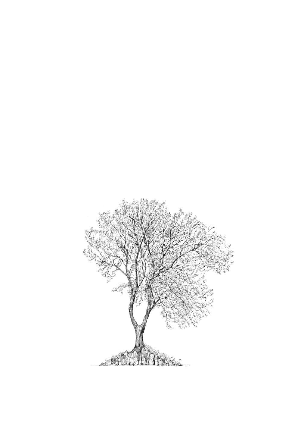 The Hardy Tree - Luke Adam Hawker LR .jpg