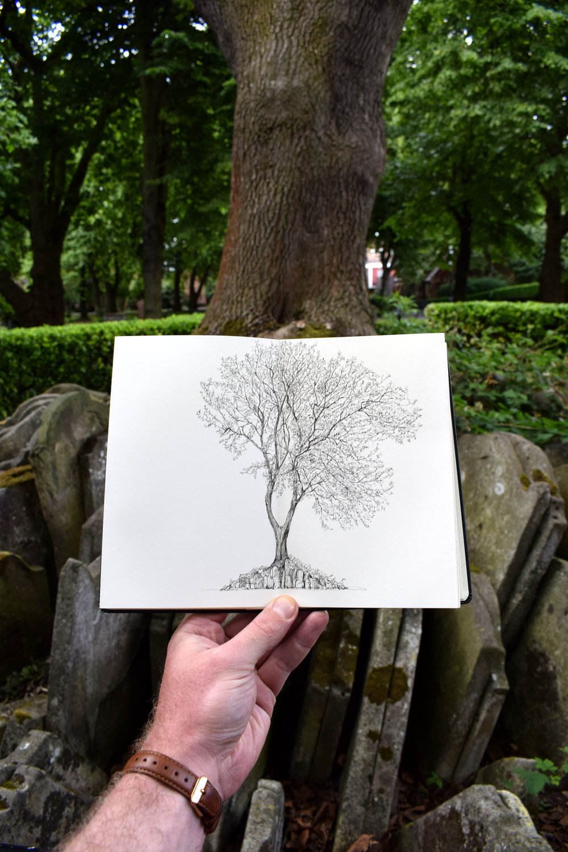 Hardy Tree.jpg