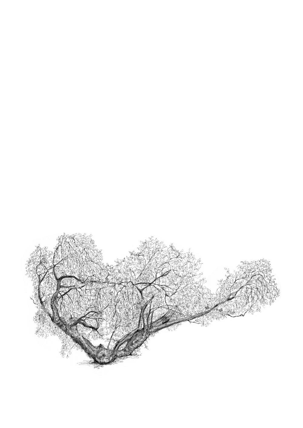 charlton house mulberry Tree - Luke Adam Hawker.jpg