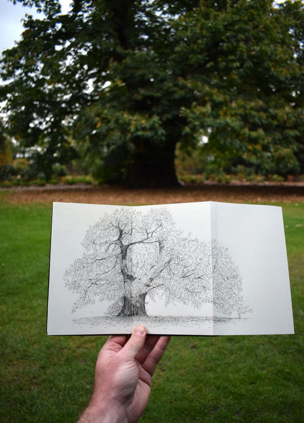 Greenwich Park Chestnut Tree - Luke Adam Hawker.jpg