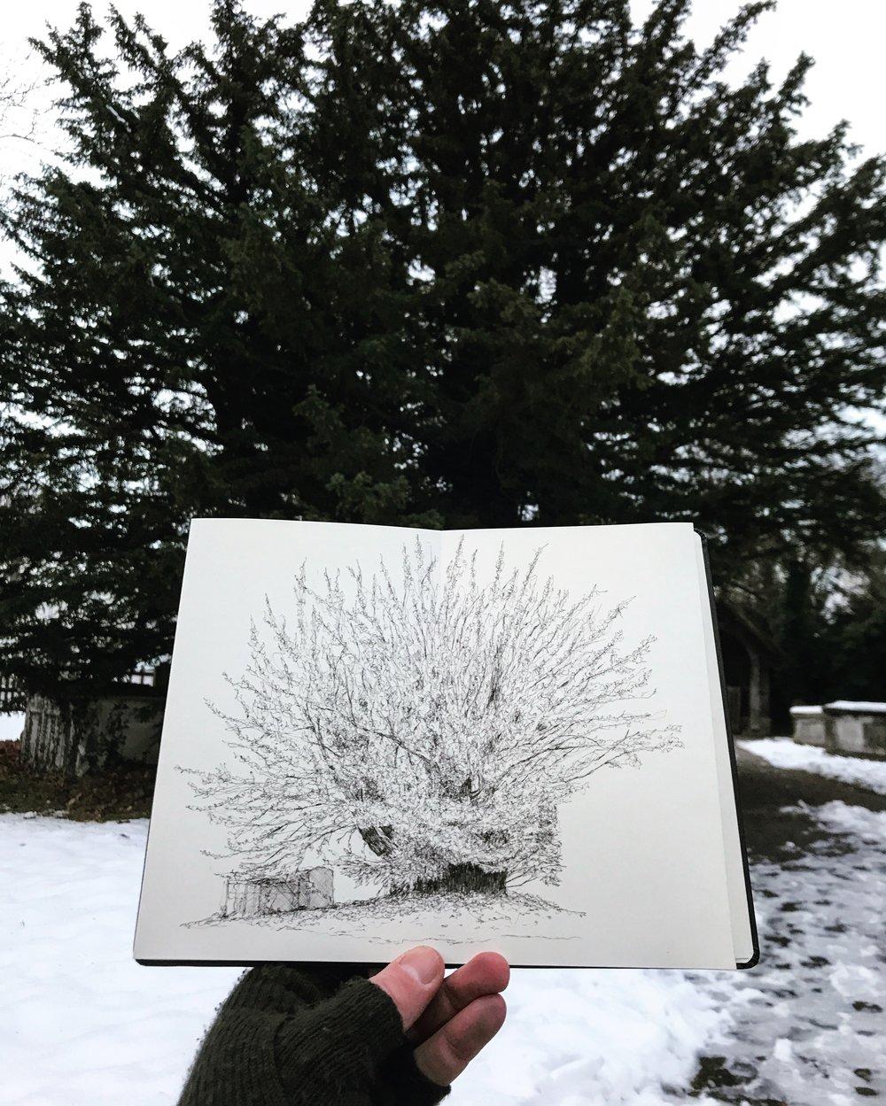 Totteridge yew Tree - Luke Adam Hawker.jpg