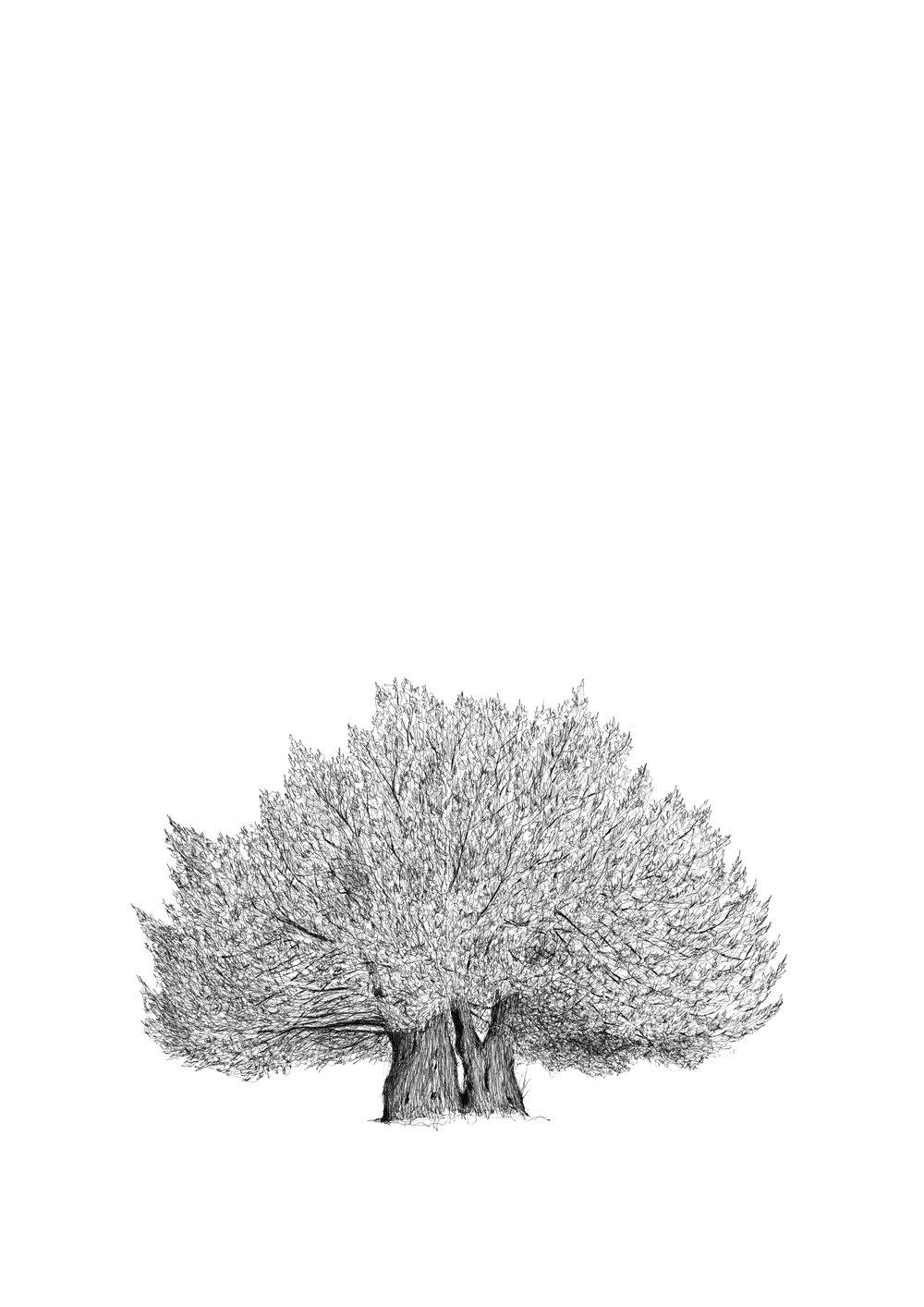 THE DARWIN TREE FOR PRINT - Luke Adam Hawker- low res.jpg