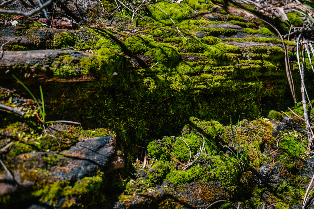 moss-oak-creek-canyon