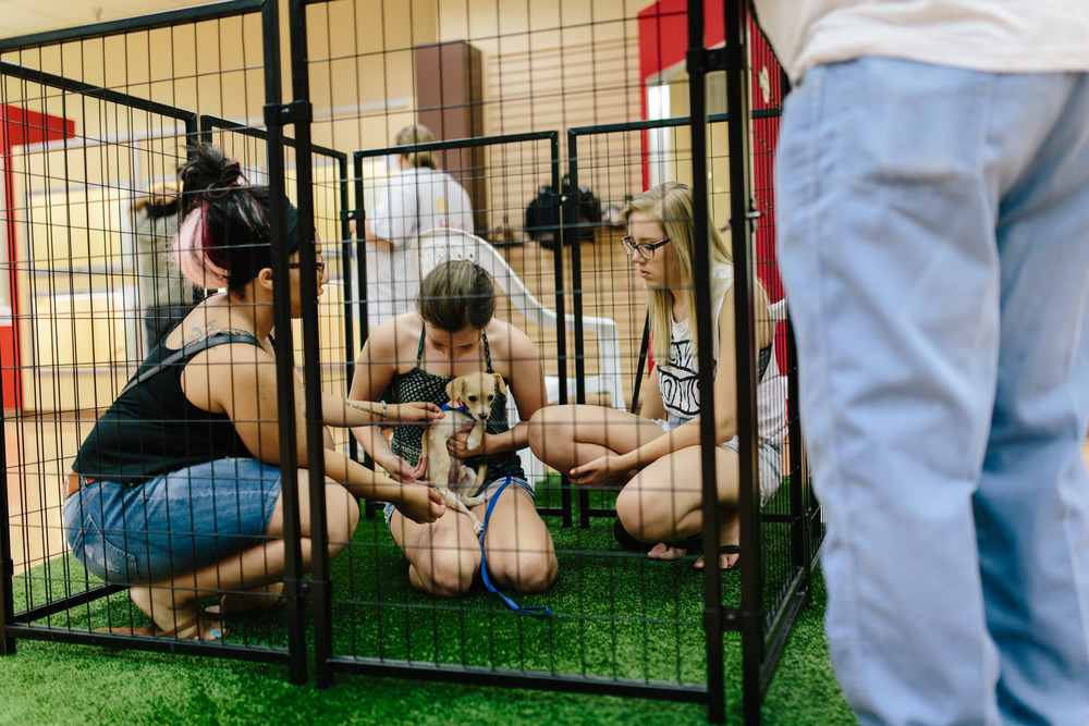 Young Girls Playing with Puppy