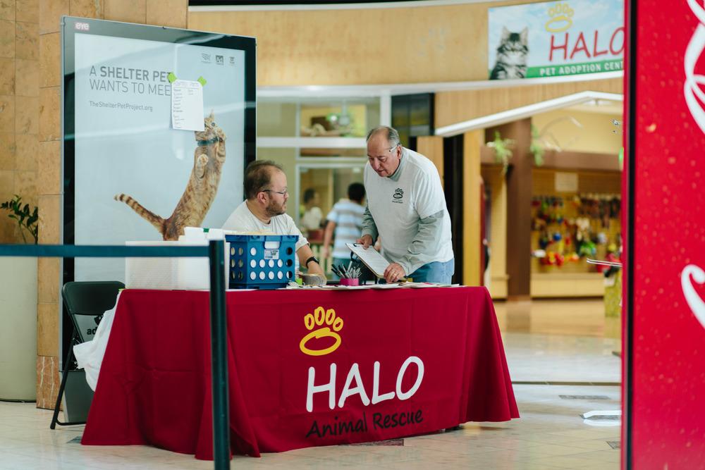 HALO Adoption Volunteers