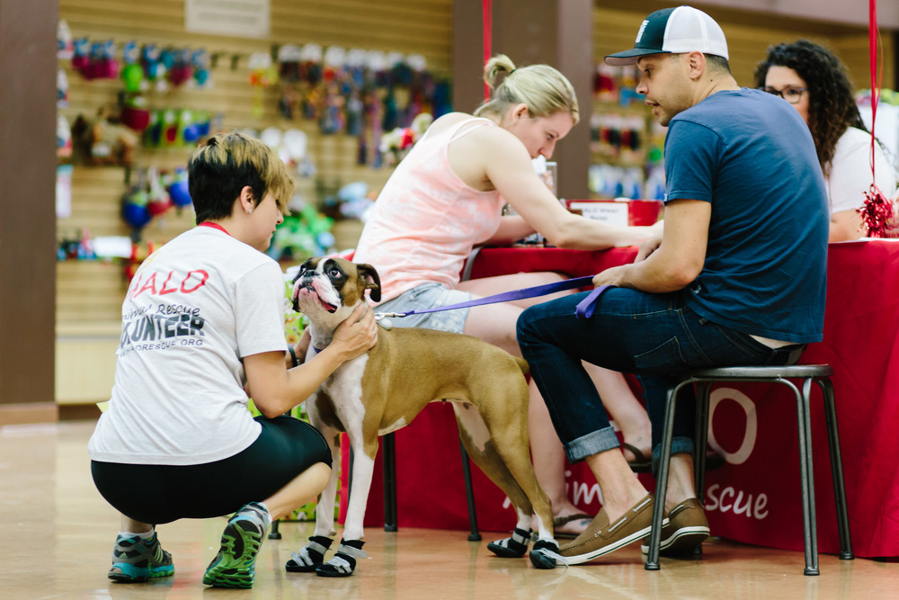Volunteer Petting Dog