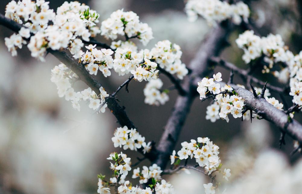 Flowers in Oak Creek Canyon