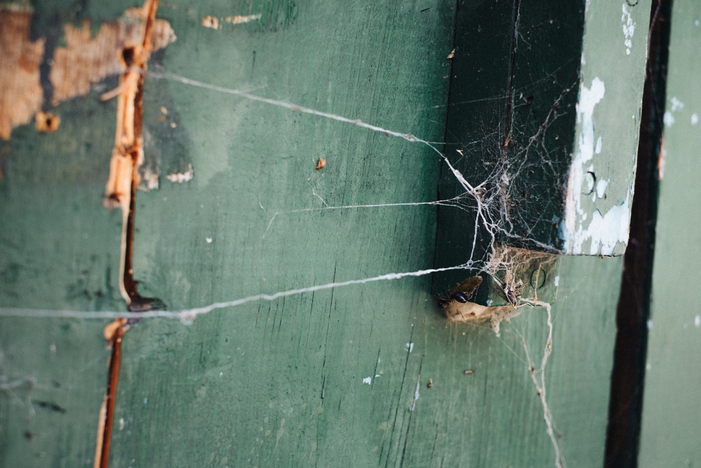 Spider Webs Cabin Inner Basin Trail