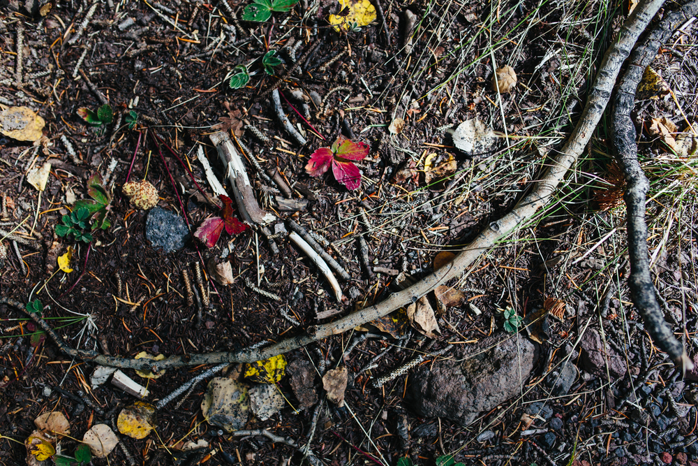 Leaves on the Ground Inner Basin Trail