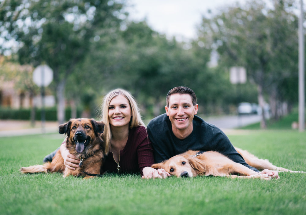 golden retriever puppy christmas