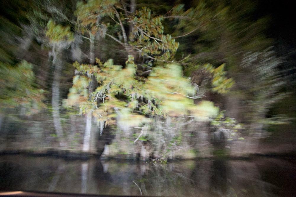 Swamp-NLE-3.jpg