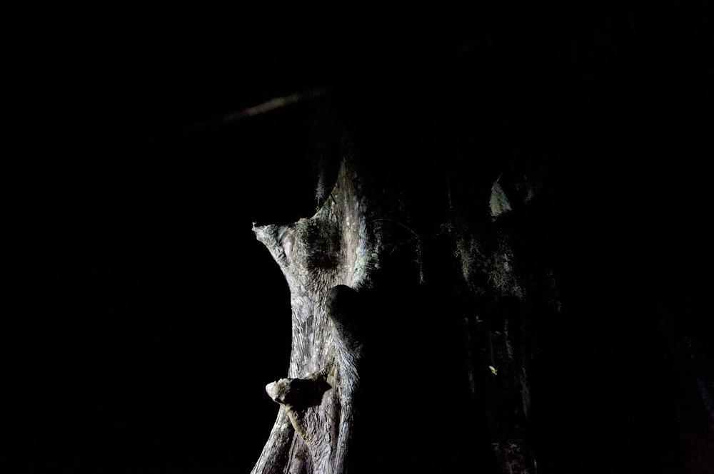 Swamp-NLE.jpg