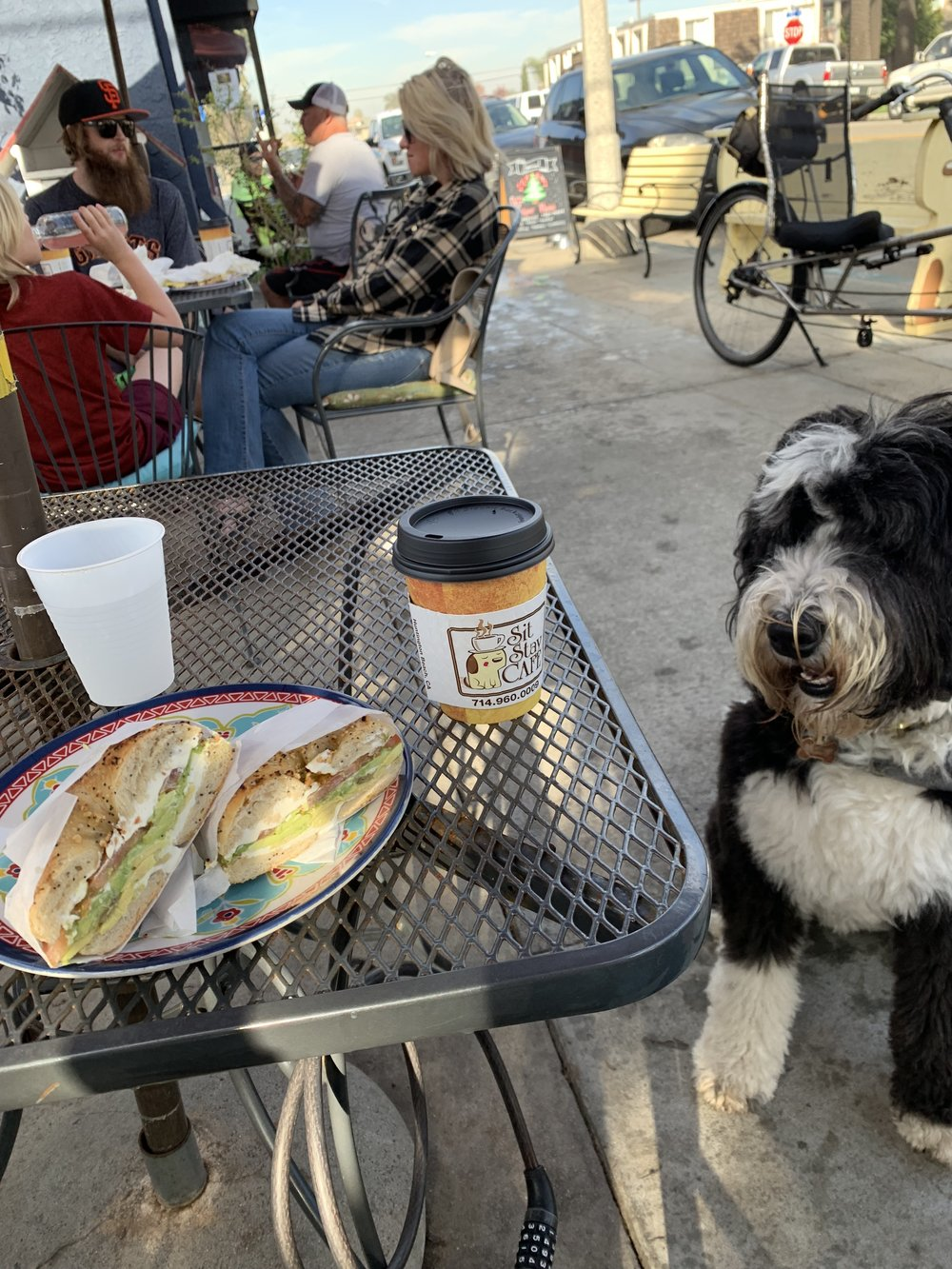 Sally begging for a bite of bagel at Sit Stay Cafe