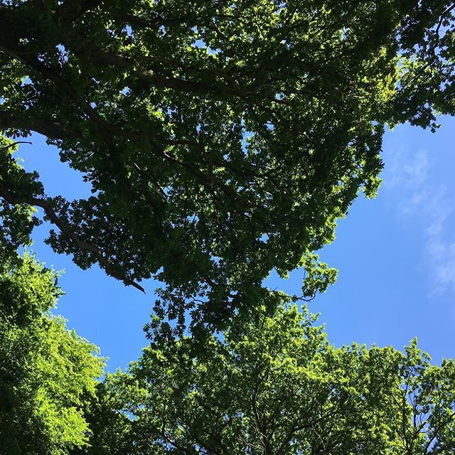 Queens wood #n8 #woodland #bluesky #trees #leaves #london #summer #june