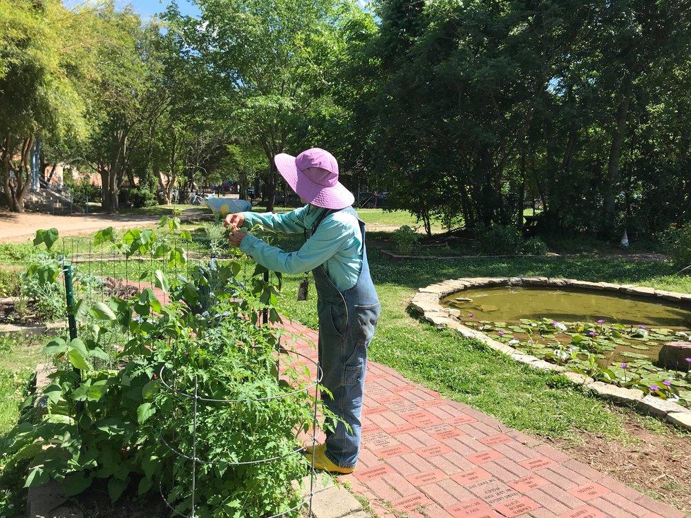 Travis Elementary Garden-08.jpg