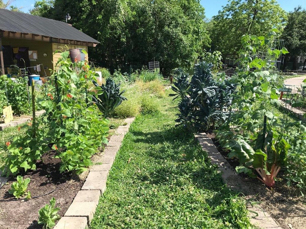 Travis Elementary Garden-11.jpg