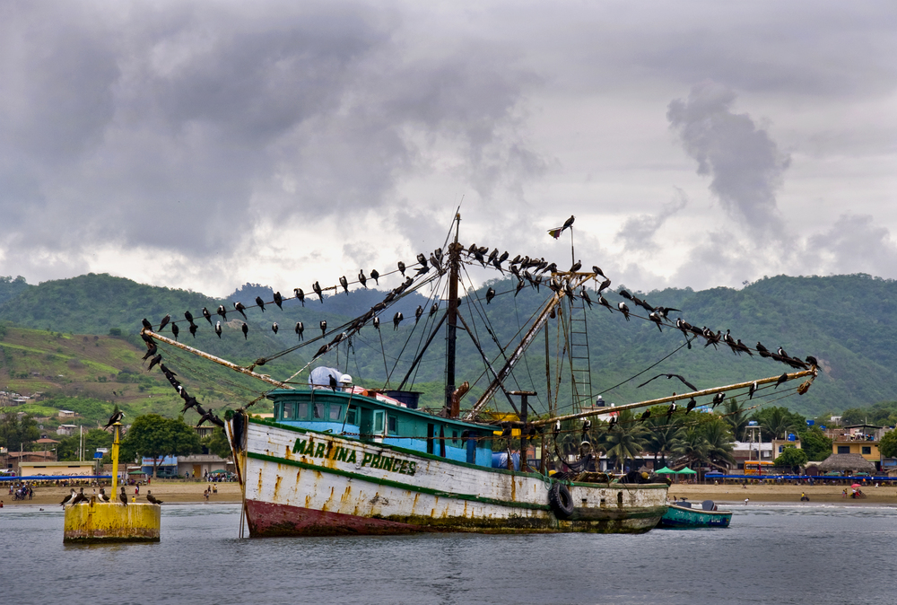 coastal birds.jpg
