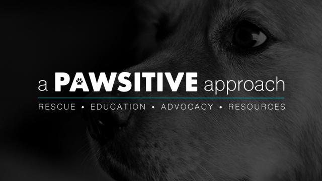 pawsitive-approach-portfolio-image.jpg
