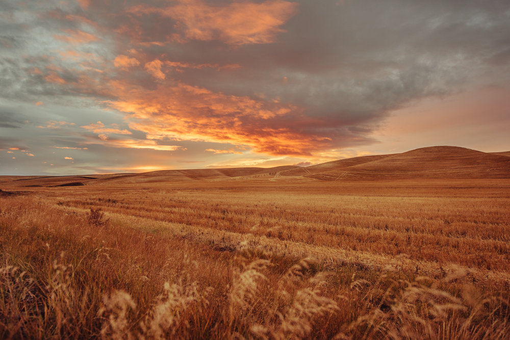 Palouse.Idaho.jpg