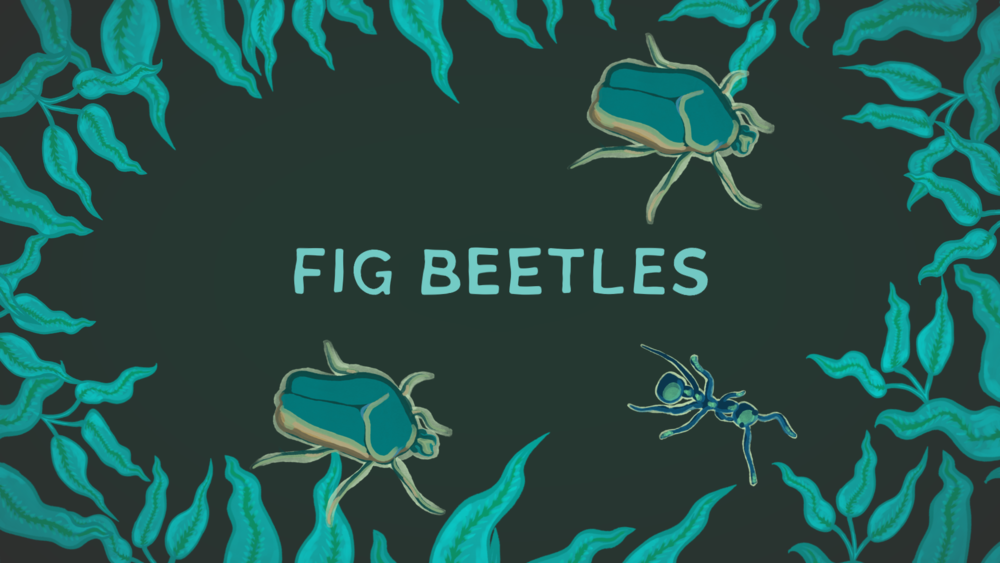 E01 BEETLES WITH TITLES (0-00-02-02).png
