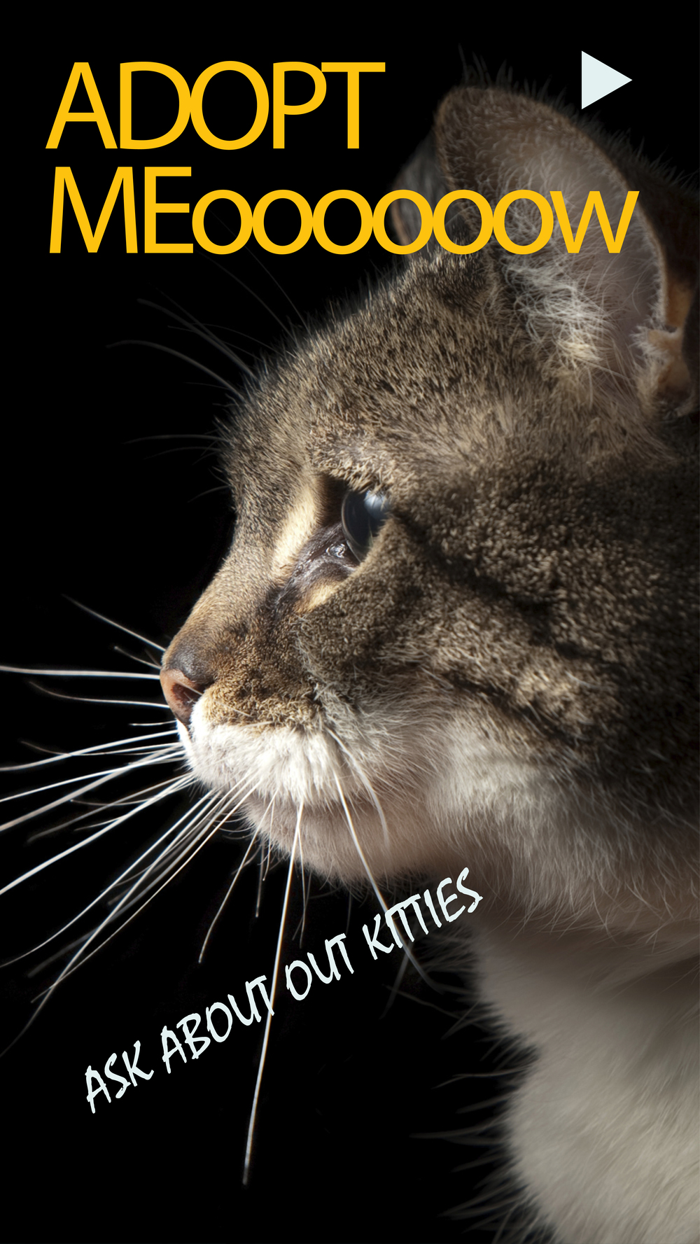 CatFaceAdopt.jpg