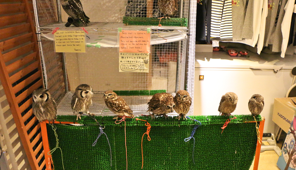 Tokyo Owl Cafe.Magical experience.