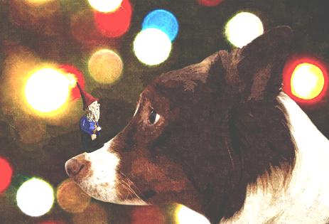 christmaspip.jpg