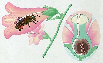 pollination.jpg