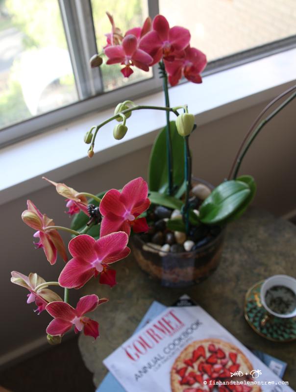 Orchid Terrarium's - Copyright Amie Mason 2014