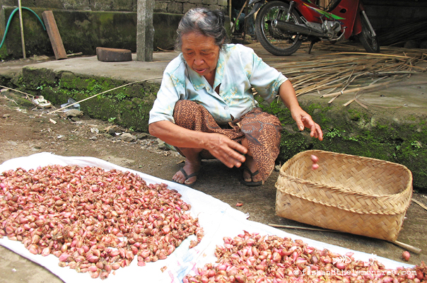 Balinese lady separating garlic - Amie Mason copyright 2013