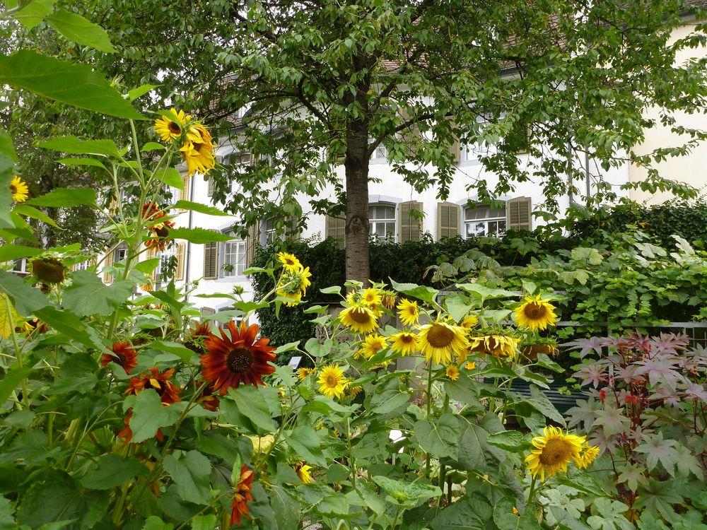 z_Garten-Isabel-Seier-P1070905.jpg
